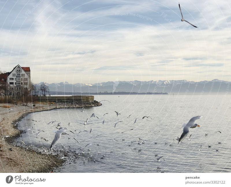und ewig grüßt... Himmel Natur Stadt Wasser Landschaft Haus Erholung Winter Ferne Tourismus See Stimmung Aussicht Alpen Seeufer Urelemente