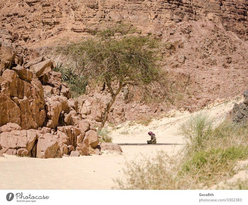 Beduine beten im Schatten sitzend in der Wüste in Ägypten Sommer Berge u. Gebirge Mensch Mann Erwachsene Natur Pflanze Sand Baum Felsen Bekleidung Schal Stein