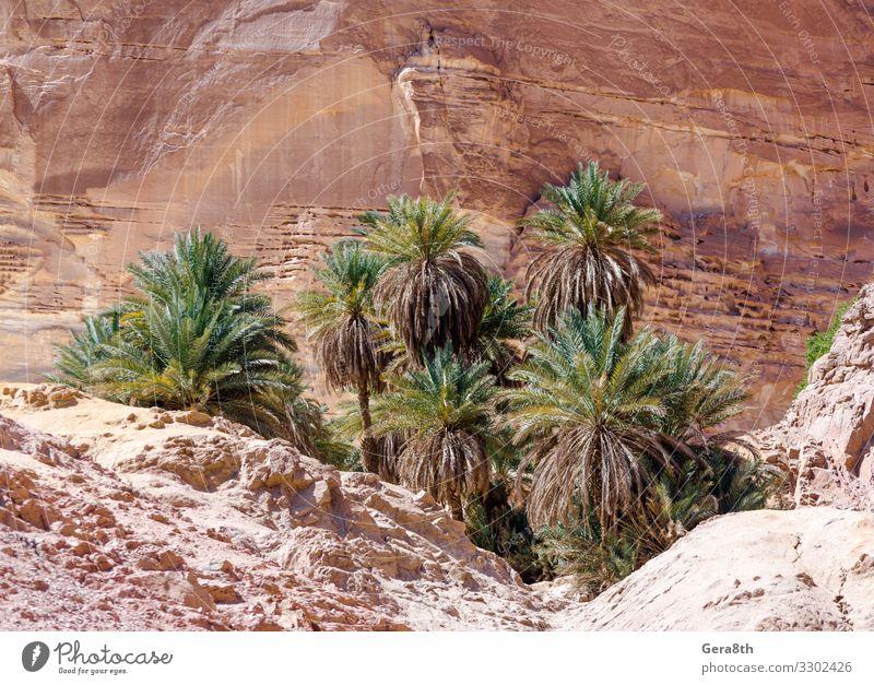 Ferien & Urlaub & Reisen Natur Sommer Pflanze Farbe Landschaft Baum Berge u. Gebirge Wärme natürlich Tourismus Stein Felsen hell Aussicht Jahreszeiten