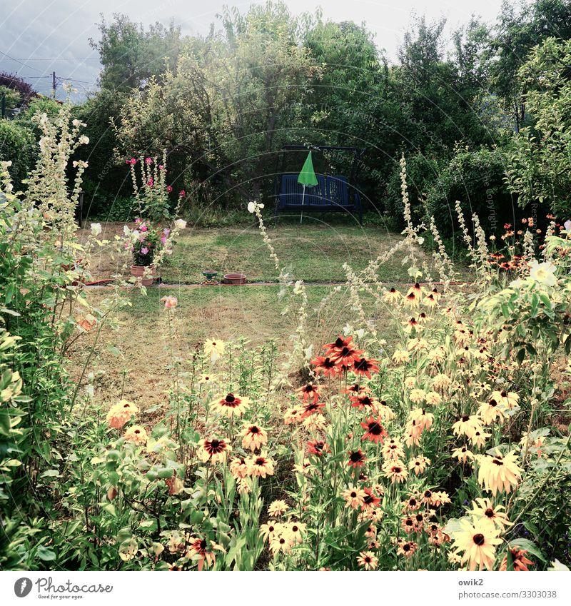Parzelle Umwelt Natur Landschaft Pflanze Wolken Sommer Schönes Wetter Baum Blume Gras Sträucher Garten Wiese Wien Wege & Pfade Blühend natürlich viele