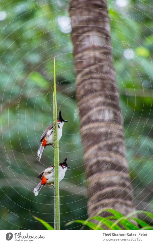 zwei Vögel auf einem Ast  vor unscharfem Hintergrund Vogel Tier Feder Farbfoto Flügel zu zweit Zusammensein zusammen edel Gefieder Palme Dschungel Freundschaft