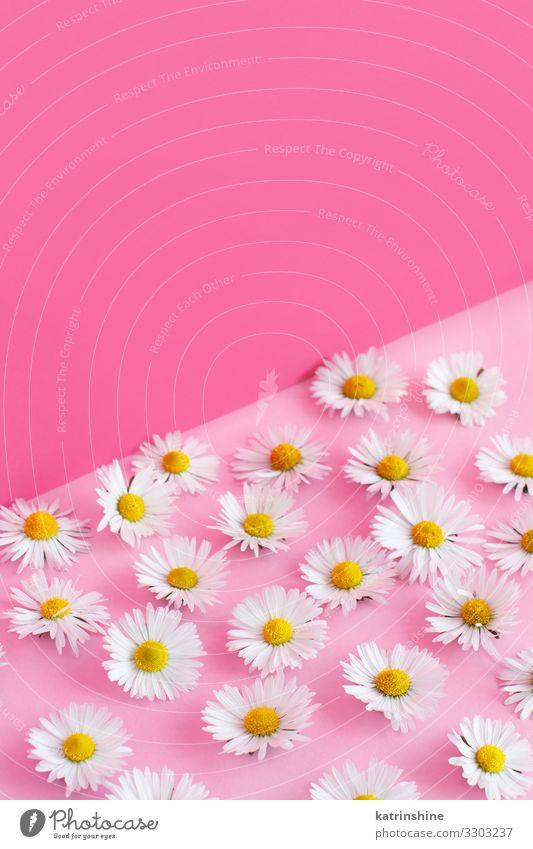 Frau weiß Blume Erwachsene Liebe Textfreiraum rosa Design Dekoration & Verzierung Kreativität Hochzeit Mutter Blütenblatt Entwurf geblümt Engagement