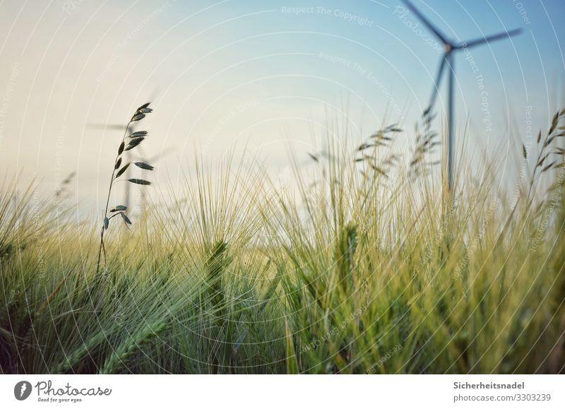 Kornfeld mit Windrad Windkraftanlage Natur Sommer Schönes Wetter Pflanze Sträucher Nutzpflanze Feld grün Getreidefeld Nahaufnahme Farbfoto Außenaufnahme