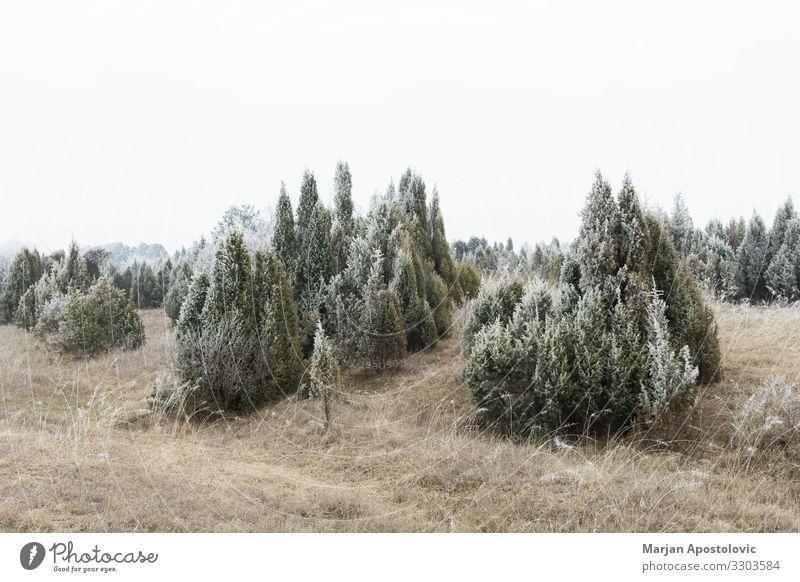 Landschaft mit vereistem Feld und Wald im Winter Umwelt Natur Pflanze Wetter Nebel Eis Frost Baum Gras Sträucher Hügel frieren Coolness kalt natürlich Stimmung
