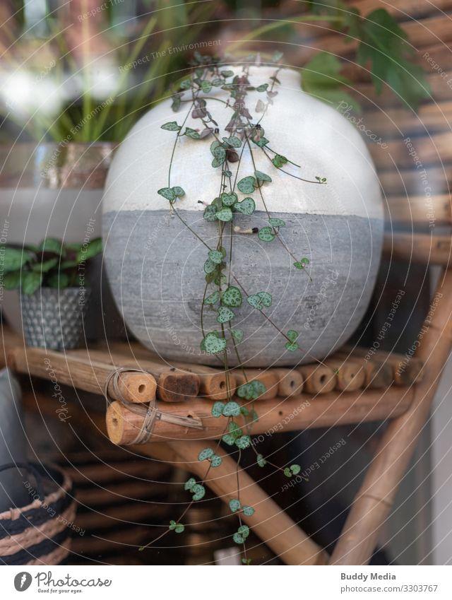 Pflanzenvase im Berliner Schaufenster Lifestyle kaufen Reichtum elegant Stil Design exotisch einrichten Innenarchitektur Dekoration & Verzierung Möbel