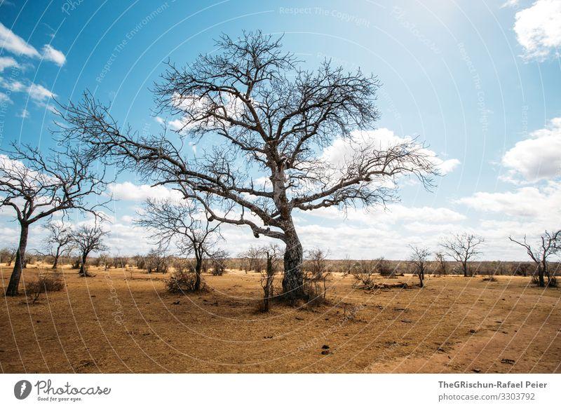 Baum in trockener Region Savanne Wolken Schatten Afrika Landschaft Natur Farbfoto Gras Himmel Umwelt Safari