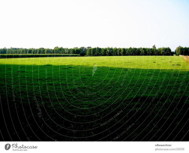 Licht und Schatten grün gelb dunkel hell Feld Übergang Feldrand Zwillbrocker Venn