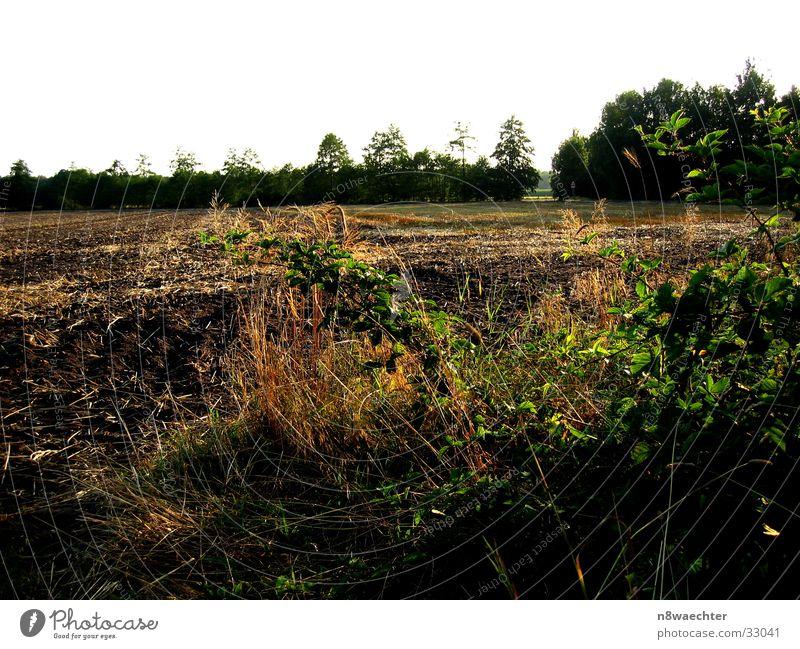Ackerland Baum grün Gras braun Feld Erde Furche Grünpflanze Zwillbrocker Venn