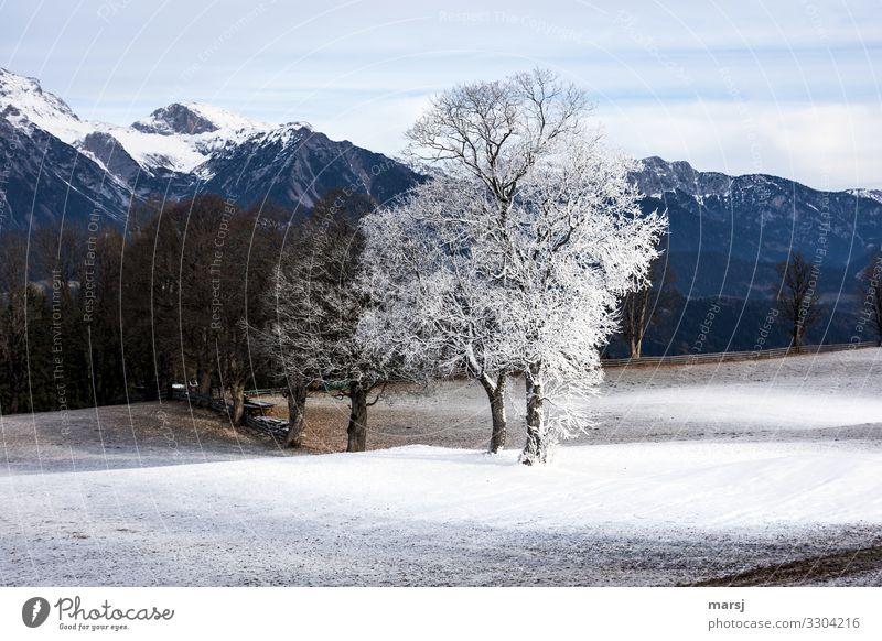 Nicht immer schneits überall. Natur Landschaft Baum Winter Berge u. Gebirge kalt natürlich Schnee außergewöhnlich Eis Kraft authentisch einzigartig Frost