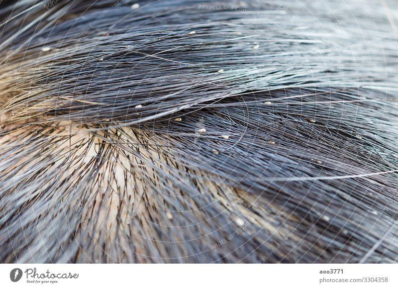 Laus-Ei Gesicht Behandlung Medikament Kind Mensch Natur Tier Fröhlichkeit klein niedlich Sauberkeit braun Hintergrund Pflege Ursachen schließen Dermatologie