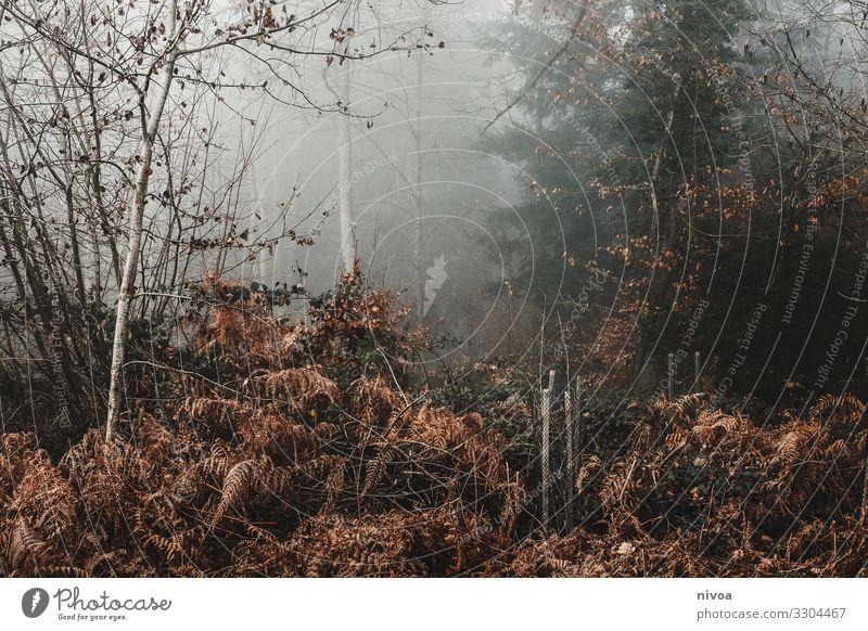 Ein Blick in den nebligen Winterwald Ausflug Abenteuer Landwirtschaft Forstwirtschaft Umwelt Natur Landschaft Klima Nebel Pflanze Baum Gras Sträucher Moos Wald