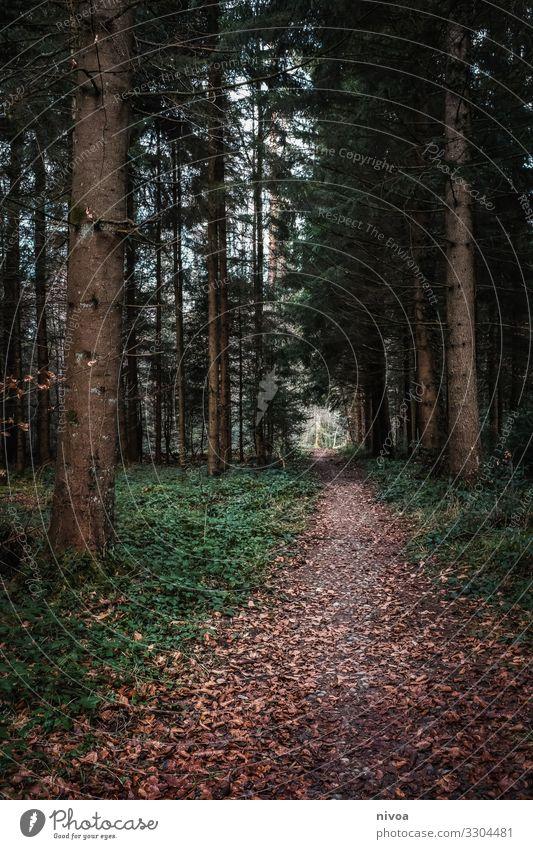 Waldweg wandern Umwelt Natur Landschaft Herbst Winter Wetter Pflanze Baum Wege & Pfade Holz beobachten Bewegung entdecken Erholung genießen laufen träumen