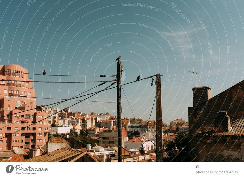 santa cruz Wolkenloser Himmel Sommer Schönes Wetter Lissabon Portugal Europa Stadt Stadtrand Haus Hochhaus Gebäude Architektur Mauer Wand Tier Vogel Taube