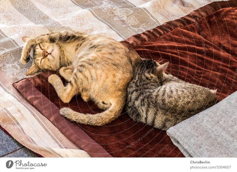 Faulenzen bei Katzen Tier Haustier Pfote 2 Erholung liegen schlafen Zusammensein Glück kuschlig Zufriedenheit Coolness Geborgenheit ruhig bequem Gelassenheit