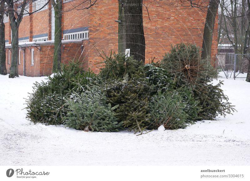Tannenbaum Abholung Weihnachtsbaum Entsorgung Weihnachten & Advent Baum Winter Lifestyle Schnee Deutschland Silvester u. Neujahr Müll werfen Großstadt Recycling