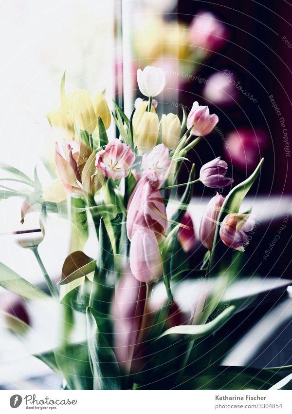 #500 Grund zu feiern und ein Dankeschön an Euch !! Natur Pflanze Frühling Sommer Herbst Winter Blume Tulpe Blatt Blüte Blumenstrauß Blühend außergewöhnlich gelb