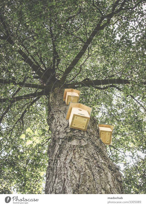 Baumhaus Natur Pflanze Vogel Häusliches Leben Wohnung Hilfsbereitschaft Sympathie Verantwortung Tierliebe Gastfreundschaft Solidarität Futterhäuschen Hausbau