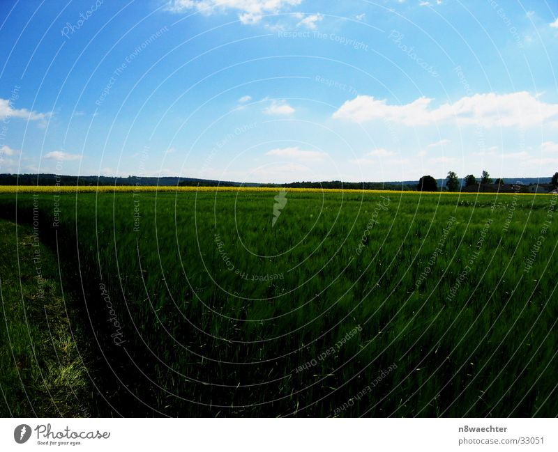 Saftiges Grün Feld Raps grün gelb Wolken filigran Weserbergland Getreide Ferne Himmel
