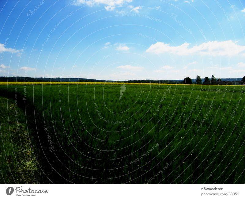 Saftiges Grün Himmel grün Wolken gelb Ferne Feld Getreide Raps filigran Weserbergland