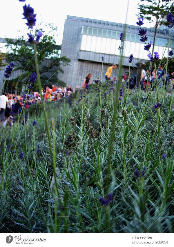 Grüne(s) in Köln Mensch blau Blume Ferne Blüte Bewegung Gebäude Hintergrundbild Verkehr Menschenmenge Fußgänger Versammlung Vordergrund