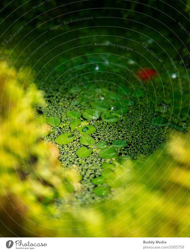 Grüne Teichoase im Botanischen Garten elegant Gartenarbeit Umwelt Natur Pflanze Wasser Wassertropfen Moos Blatt Blüte Grünpflanze Wildpflanze Park