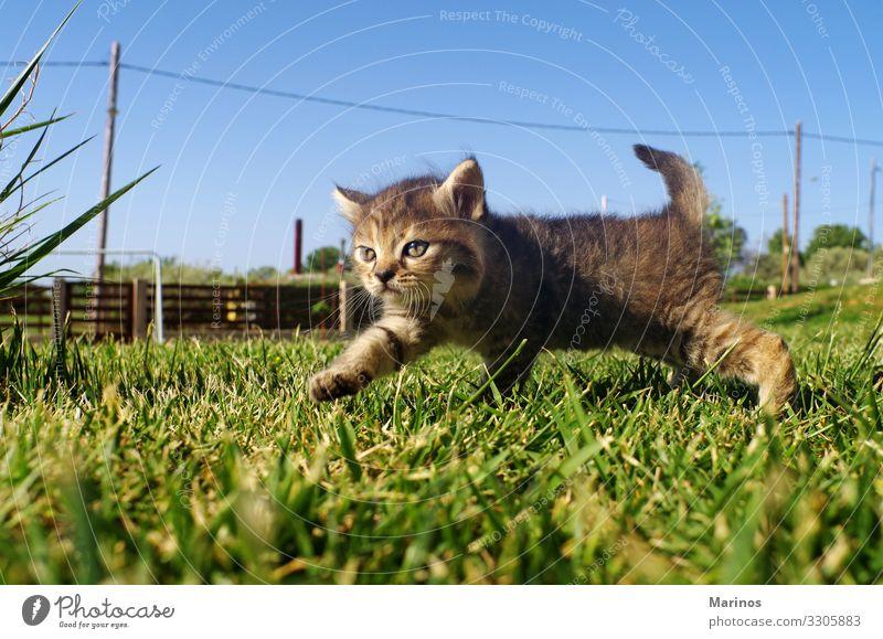 Kleine Katze auf dem Rasen des Gartens. schön Spielen Baby Natur Tier Gras Haustier Pfote klein lustig niedlich grün Katzenbaby Hintergrund jung hübsch Tabby