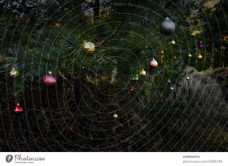 Wilder Weihnachtsbaum Weihnachten & Advent Anti-Weihnachten Baumschmuck Christbaumkugel Dekoration & Verzierung Wald Nadelbaum Kiefer Menschenleer Textfreiraum