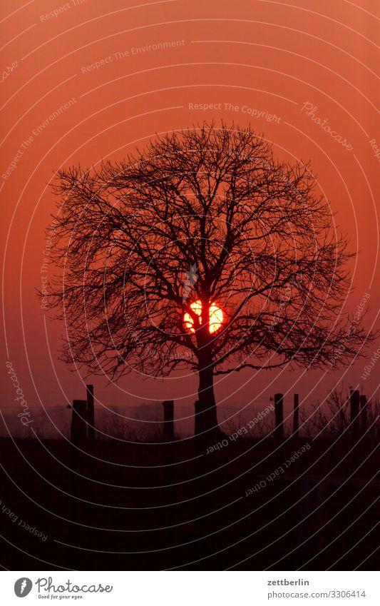 Baum mit Sonne arkona Dorf Fischerdorf glowe Insel Kap Kap Arkona Küste Küstenwache Landschaft Mecklenburg-Vorpommern Meer Ostsee Rügen schaabe Strand