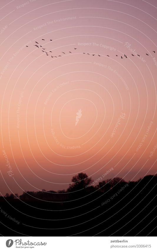 Vögel am Abend Ferien & Urlaub & Reisen Farbe Landschaft Sonne Meer ruhig Textfreiraum Vogel Insel Romantik Ostsee Dorf Rügen Farbenspiel Mecklenburg-Vorpommern
