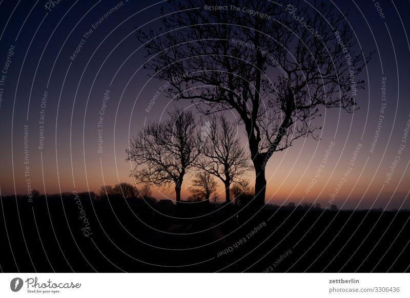 Landstraße am Abend Dämmerung Farbe Farbenspiel Insel Landschaft Mecklenburg-Vorpommern Rügen Sonnenuntergang Ferien & Urlaub & Reisen Straße Allee Winter