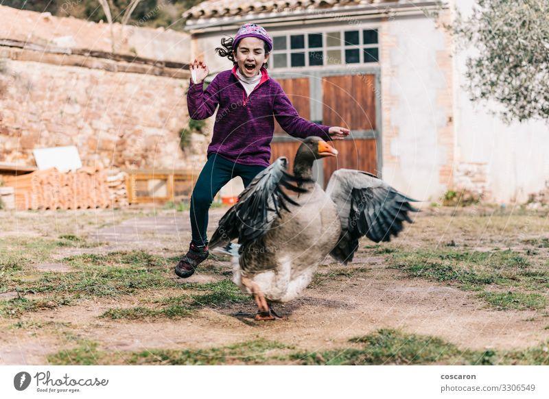 Ein kleines Mädchen erschreckt eine Gans auf einer Farm. Freude Glück Freizeit & Hobby Spielen Ferien & Urlaub & Reisen Sommer Sommerurlaub Haus Garten Kind