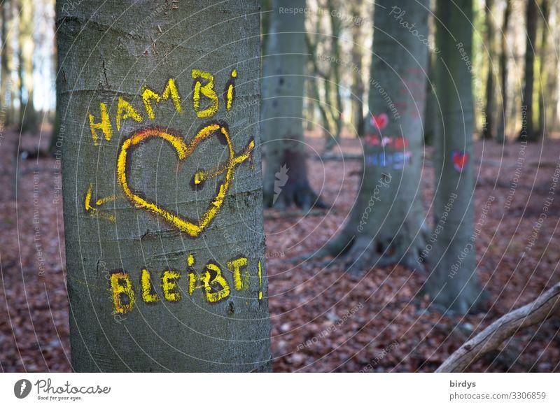 Im Hambacher Forst Umwelt Natur Sommer Klimawandel Baum Wald Schriftzeichen Graffiti Herz Liebe authentisch Freundlichkeit Zusammensein nachhaltig positiv