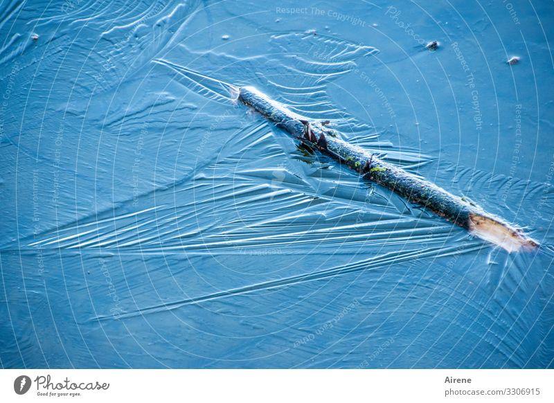 Blaueis Urelemente Winter Schönes Wetter Eis Frost Ast Teich See frieren blau kalt Eisfläche Glatteis gefroren hell-blau himmelblau Stock fest gefangen leuchten