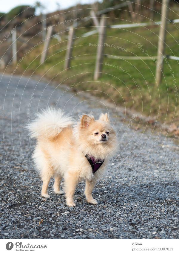 OLYMPUS-DIGITALKAMERA Hund Spaziergang Gassi gehen Tier Haustier Säugetier laufen Außenaufnahme Farbfoto Natur 1 mit dem Hund rausgehen Hundeleine Freundschaft