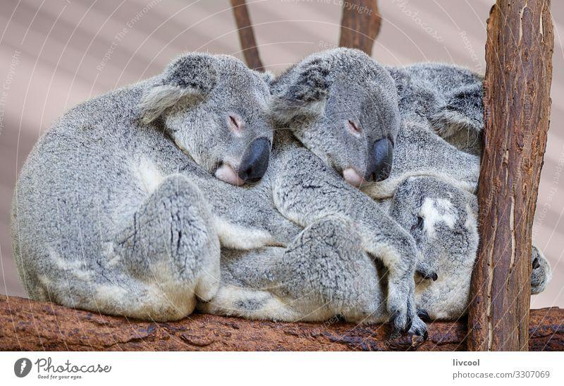 Ferien & Urlaub & Reisen Natur schön Baum Erholung Tier Wald Liebe natürlich Gefühle Familie & Verwandtschaft Menschengruppe braun grau Ausflug Zufriedenheit