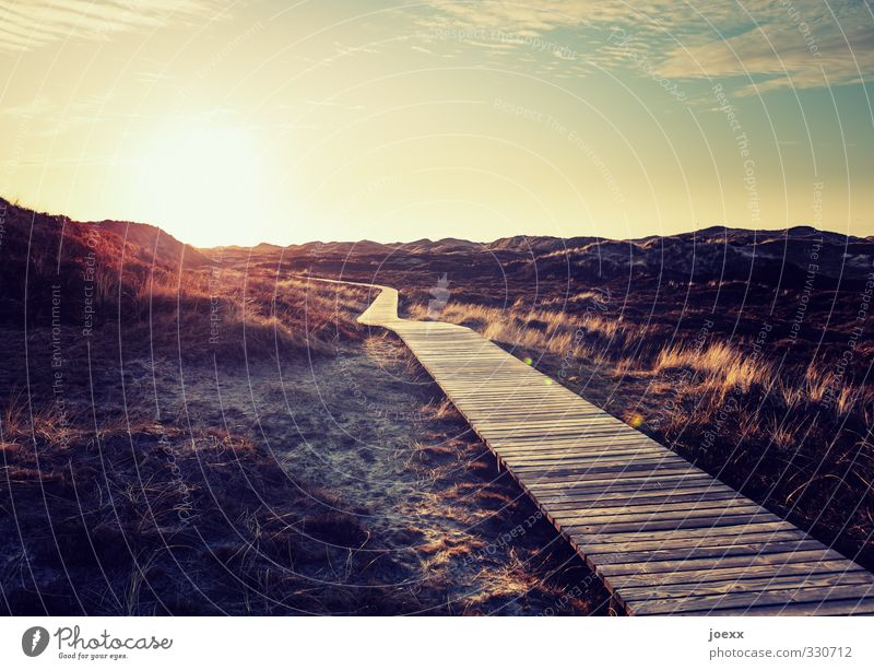 Ewig Landschaft Horizont Sonne Sonnenaufgang Sonnenuntergang Sonnenlicht Sommer Schönes Wetter Insel Amrum Wege & Pfade schön Wärme blau braun gelb