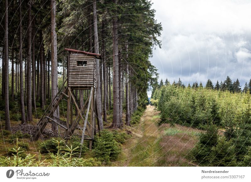 Weidmannsheil Freizeit & Hobby Jagd Landwirtschaft Forstwirtschaft Natur Landschaft Pflanze Himmel Wolken Frühling Sommer Baum Gras Wald Bauwerk Wege & Pfade
