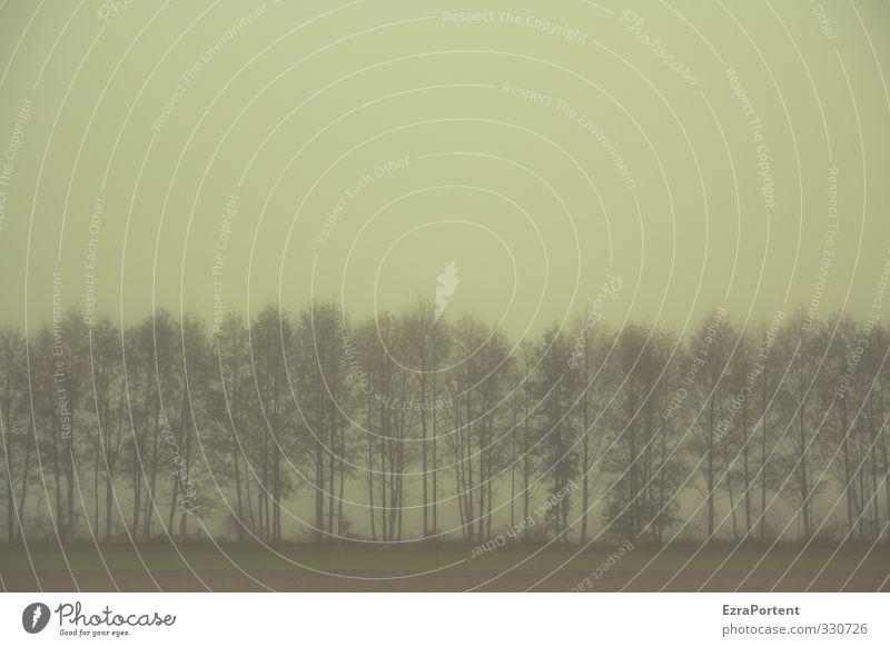 | | | | | | | | | Umwelt Natur Landschaft Pflanze Erde Himmel Wolkenloser Himmel Herbst Winter Klima Wetter schlechtes Wetter Nebel Baum Feld Wald dunkel kalt