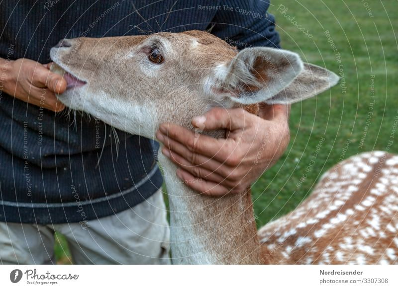 Vertrauen Freizeit & Hobby Arbeit & Erwerbstätigkeit Mensch Hand Natur Gras Park Wiese Tier Wildtier 1 Fressen füttern Freundlichkeit nachhaltig positiv
