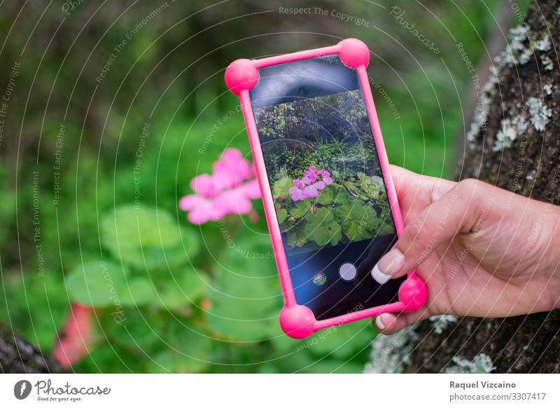 Foto mit einem Smartphone zu einer rosa Blume. Telefon Handy Technik & Technologie Natur Frühling schön grün Mobile zu fotografieren Anzeige Funktelefon digital