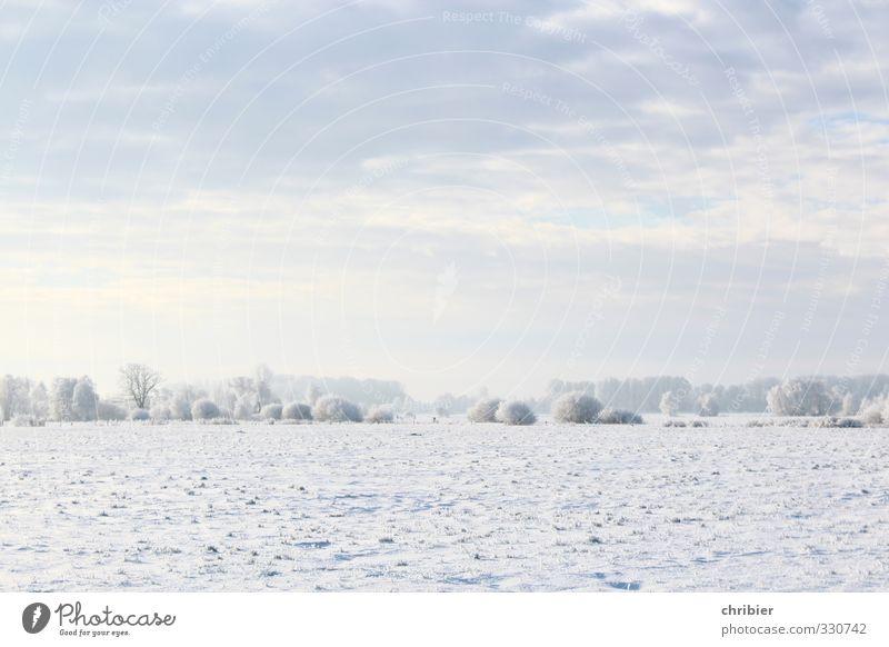 Flachwinter Umwelt Natur Landschaft Himmel Wolken Horizont Winter Schönes Wetter Schnee Feld frei Unendlichkeit hell kalt blau weiß ruhig Erholung Feuchtwiese