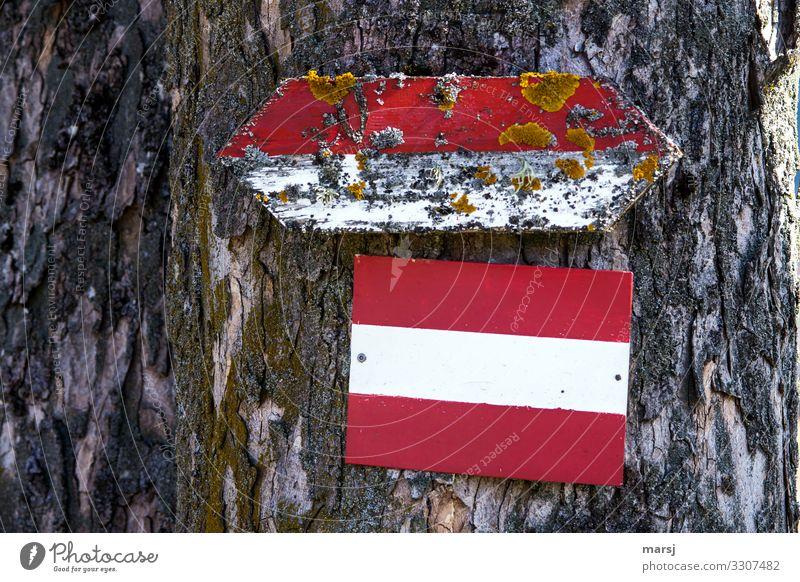Wegweisend alt Holz wandern Schilder & Markierungen authentisch Beginn Zukunft einzigartig Hinweisschild Fußweg Wandel & Veränderung Zeichen Sauberkeit Hoffnung