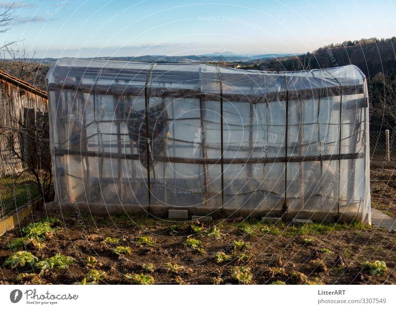 KREATIVES GEWÄCHSHAUS Lebensmittel Gemüse Salat Salatbeilage Frucht Ernährung Bioprodukte Vegetarische Ernährung Gesunde Ernährung Traumhaus Garten Gartenarbeit