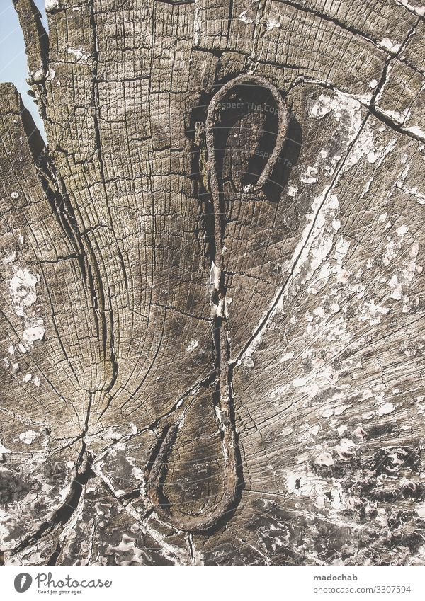 Lebenslinien Gesundheit Klima Klimawandel Baum Holz Metall Sorge Überleben Umweltschutz Verfall Vergangenheit Vergänglichkeit Verzweiflung Wachstum Wege & Pfade