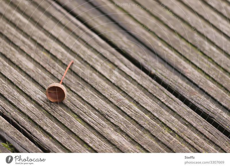 Herbstdeko Umwelt Natur Eicheln Deutschland Fußweg Holzweg Boden Holzfußboden Bodenbelag Steg einfach klein natürlich braun achtsam Einsamkeit Herbstgefühle