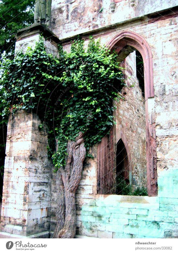 Bunte Ruine Gebäude Baum Fenster grün Weimar Architektur Fensterbogen alt historisch Historische Bauten verfallen Detailaufnahme Bildausschnitt Mauer Steinmauer