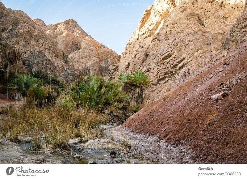 Berglandschaft mit Palmen in der Wüste Ägyptens Erholung Ferien & Urlaub & Reisen Tourismus Sommer Berge u. Gebirge Natur Landschaft Pflanze Himmel Wolken Baum