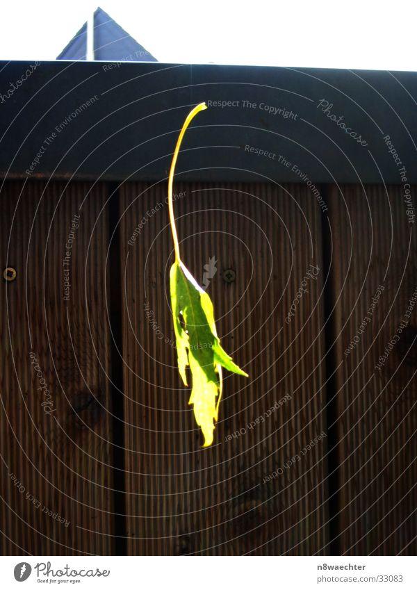 Schwebendes Blatt grün Spinnennetz Balkon braun Licht Sonne