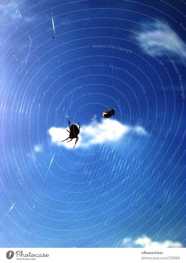Ins Netz gegangen Himmel weiß Sonne blau Fliege Verkehr Stoff Spinne Spinnennetz