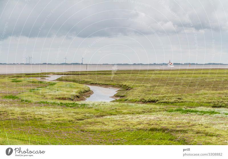 Spiekeroog in East Frisia Sommer Meer Insel Wohnung Natur Landschaft Pflanze Wasser Küste Nordsee authentisch Ostfriesland Landkreis Friesland bewachsen